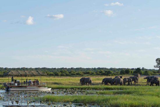 Boots-Safari mit Elefanten am grünen Flussufer des Chobe