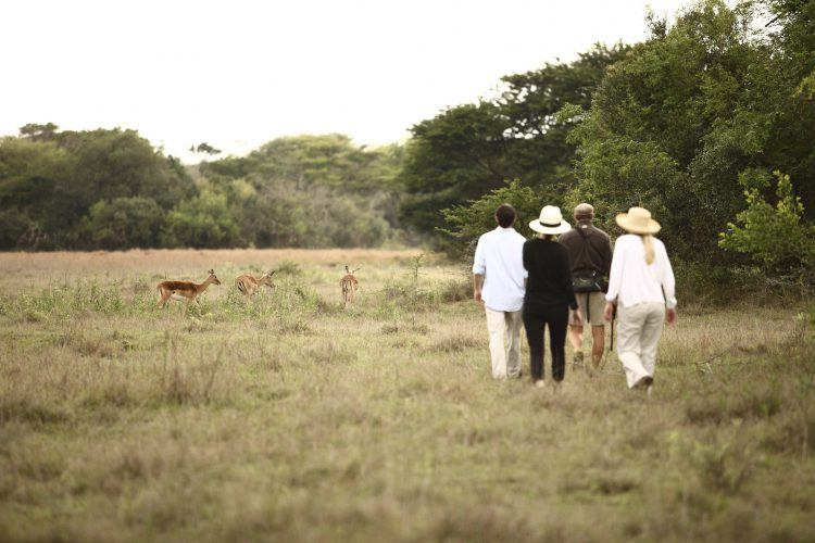 Bushwalk activity at Phinda Private Game Reserve in KwaZulu-Natal