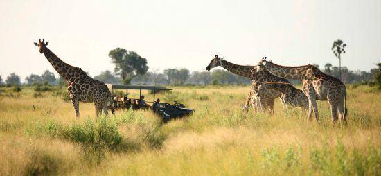 Botswana | Okavango
