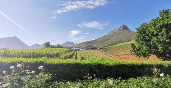 Ein Tag bei Delaire Graff - Ausblick auf die malerischen Weinberge von Stellenbosch