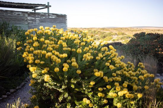 A blooming nature reserve borders STandloper Ocean Boutique Hotel's property