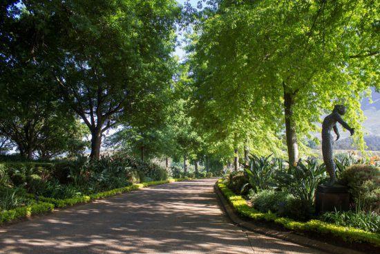 Grüne Bäume an der Auffahrt zum Weingut Delaire Graff