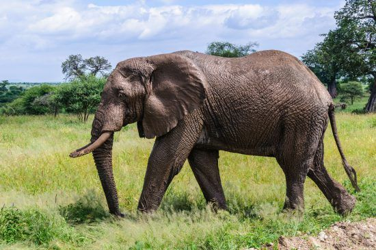 A wide variety of wildlife encompass this Great Migration Safari