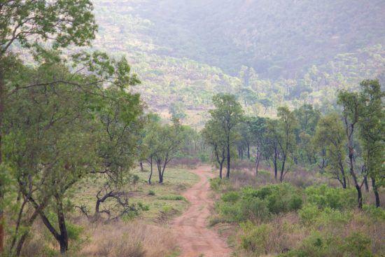 Die malerische Landschaft im Welgevonden Game Reserve