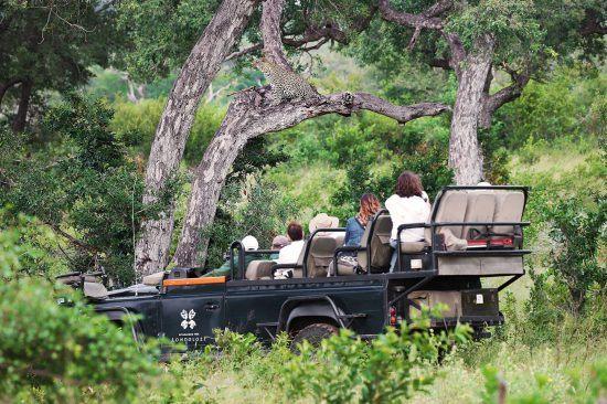 Safari tourists on a game drive with Londolozi