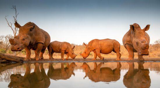 Les voyages internationaux en Afrique du Sud sont à nouveau possibles