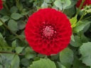 Blyton lady in red
