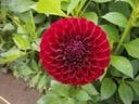 Blyton royal velvet