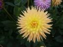 Cherwell goldcrest