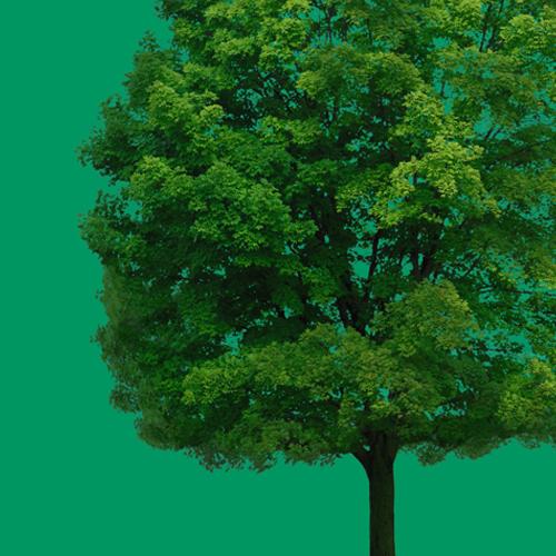 Tree 500px 500px