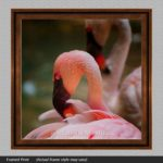 pink flamingo pictures