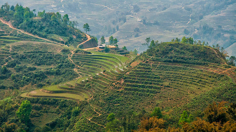 sapa rice fields vietnam