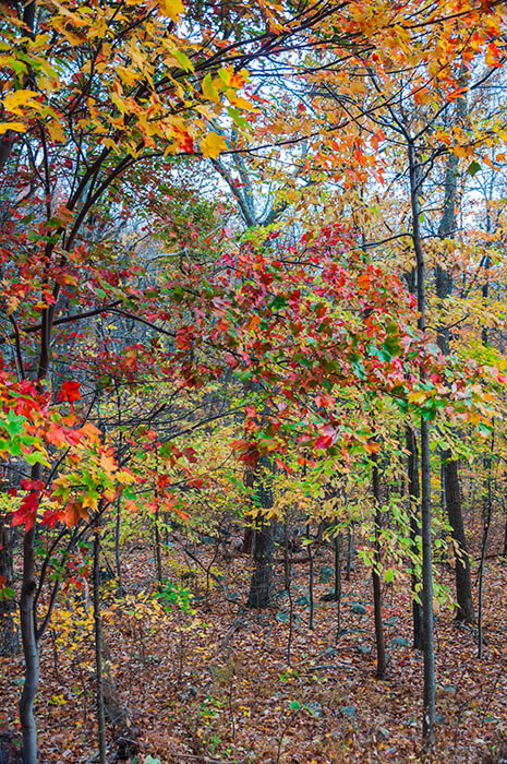 virginia fall colors peak