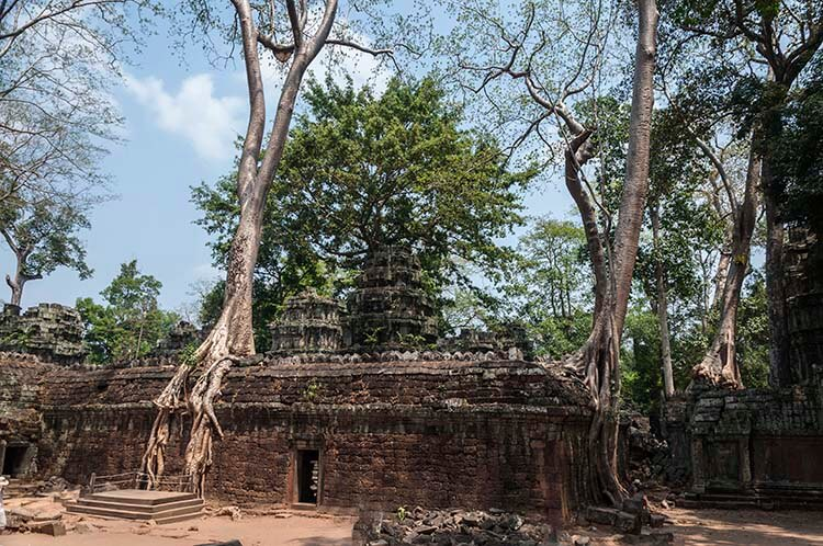angkor wat temple trees