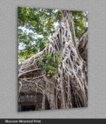 angkor wat tree roots print