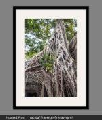 angkor wat tree roots canvas framed print