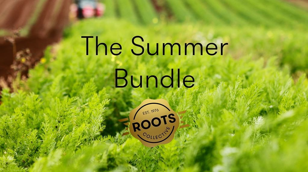 The summer bundle %28blog image%29