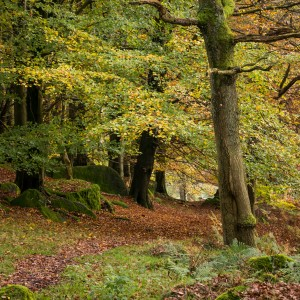 Padley Gorge 4 of 4