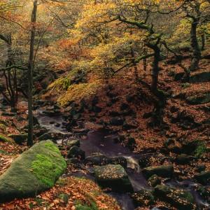 Padley Gorge and Burbage Brook