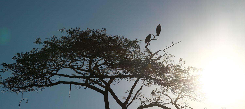 Birdwatching-1