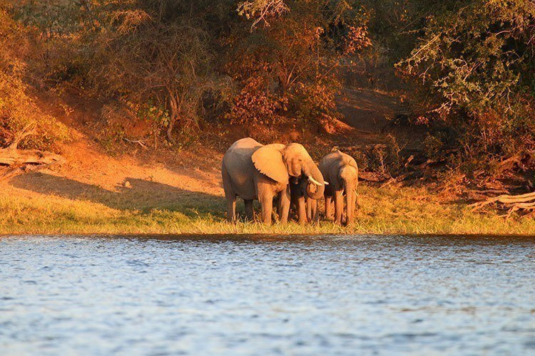Elephants on the Zambezi Tamlin Wightman 4