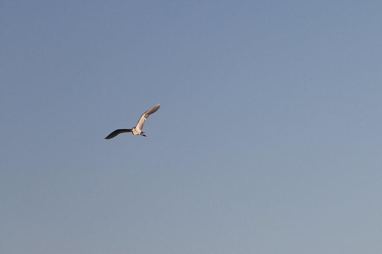 Birding 7
