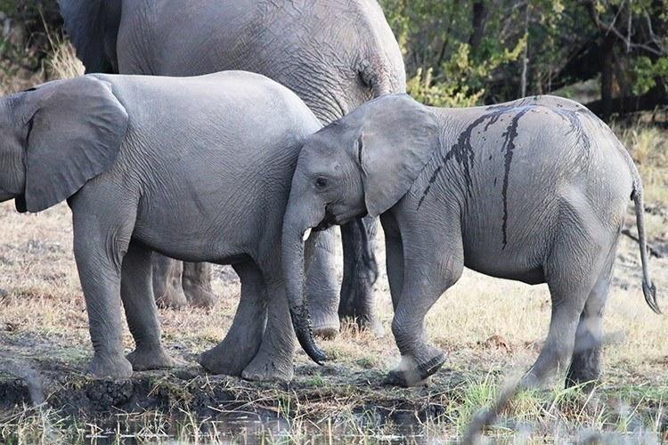 Elephants on the Zambezi Tamlin Wightman 10