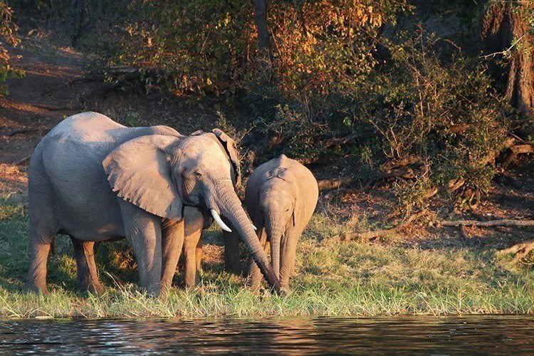 Elephants on the Zambezi