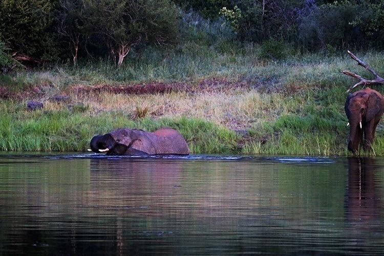 Night Swimming With Elephants 1