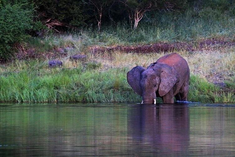 Night Swimming With Elephants 3