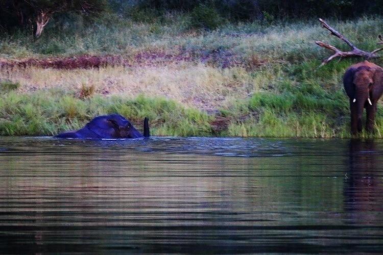 Night Swimming With Elephants