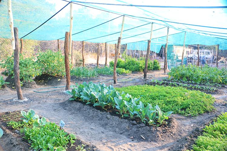royal-chundu-vegetable-garden-2