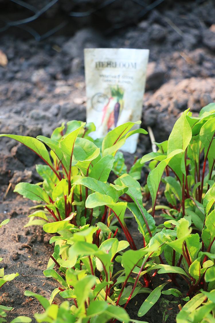royal-chundu-vegetable-garden-5