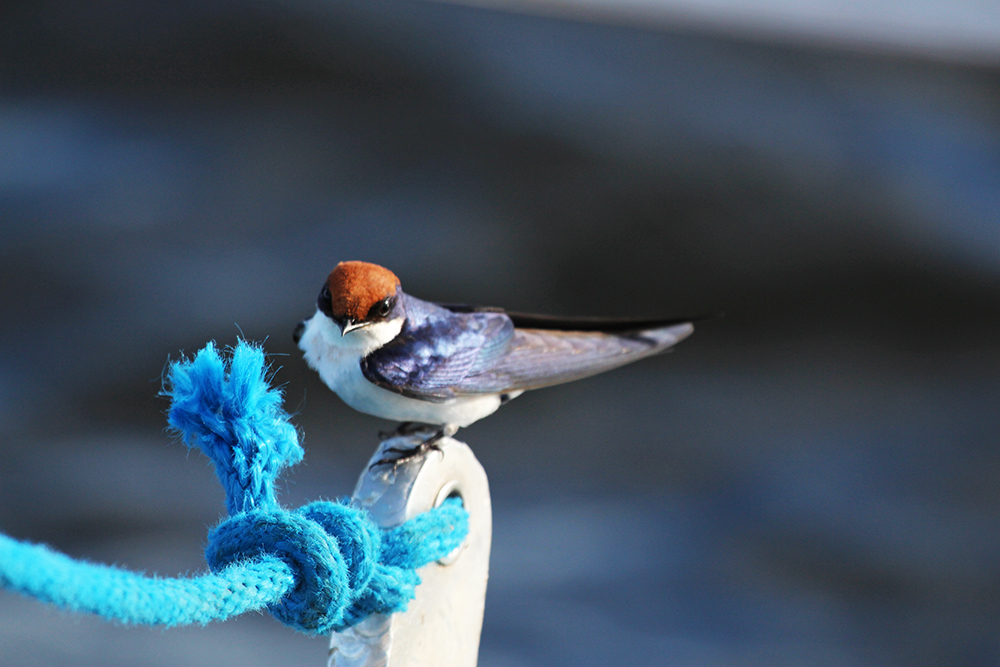 RC Birdlife