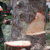 Clarkes tree care ltd