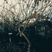 Apple tree pruning before.