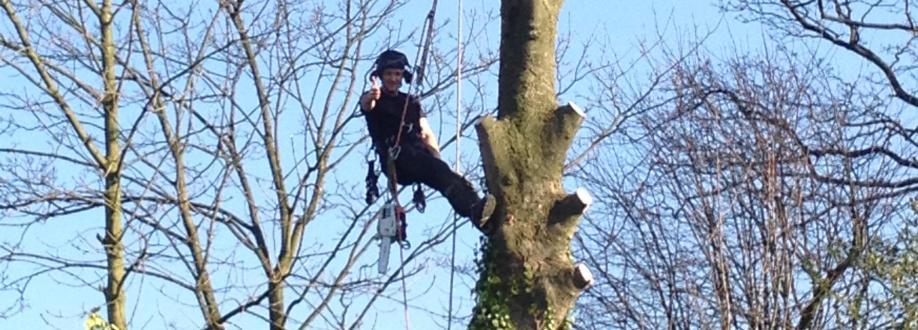 Scott Davies Tree Surgery