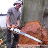 Ecotech Tree Care