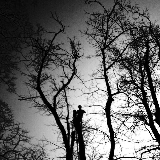 Barnett tree services