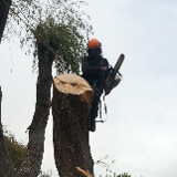 Absolute tree care llp