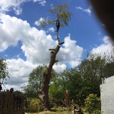 Treevolution Tree Surgery