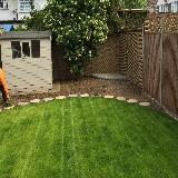 D.e.w.tree & garden services