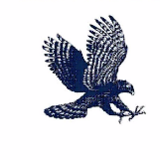 hawk plastering