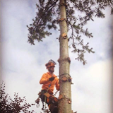 First class tree care