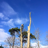 Ashwell Tree Services
