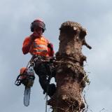 acorntreeservicesscotland
