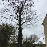 Dorset tree and garden care