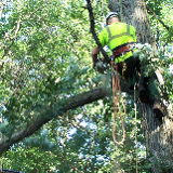 B T Tree care and ground works