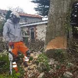 J.A TREEWORKS
