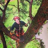 Steves Trees